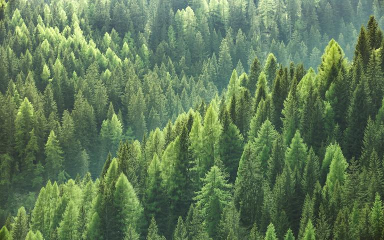 Miškų supirkimas, kuris praverčia parduodant mišką